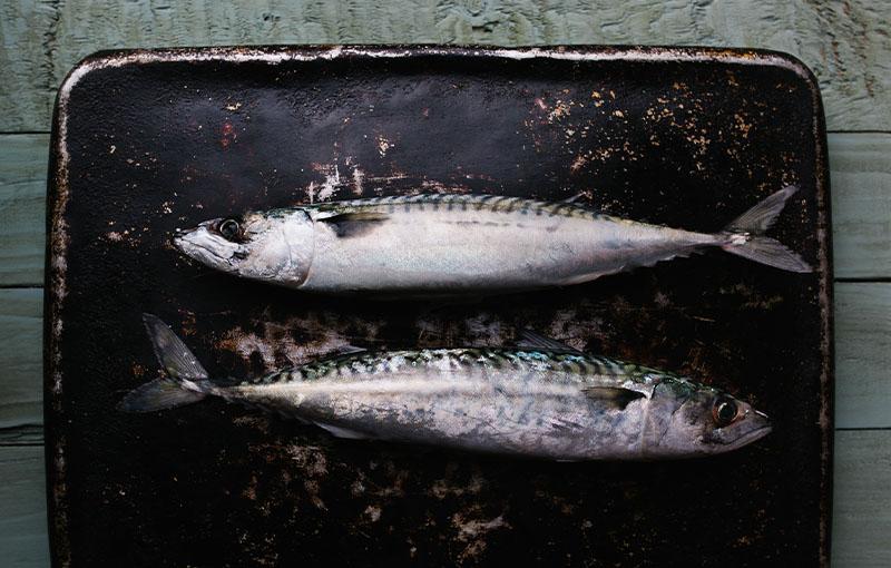 Työpaja: Suomalaiset kalat, Markus Aremo – Gastronomilta gastronomille